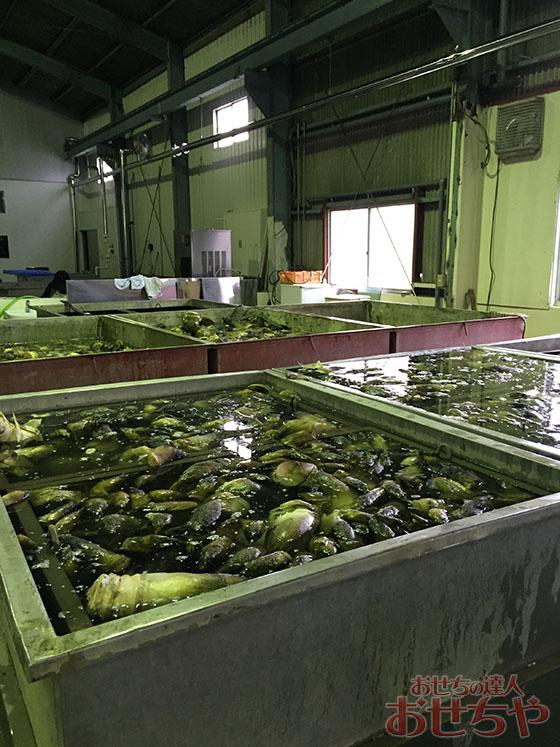 おせちや産地訪問記「たけのこ」編・京都府山城地域のたけのこたけのこを水煮にする様子