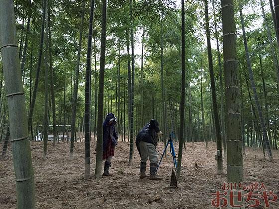 おせちや産地訪問記「たけのこ」編・京都府山城地域のたけのこ良質な土