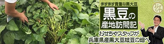 ~黒豆の産地訪問記~おせちやスタッフが兵庫県産黒大豆枝豆畑へ