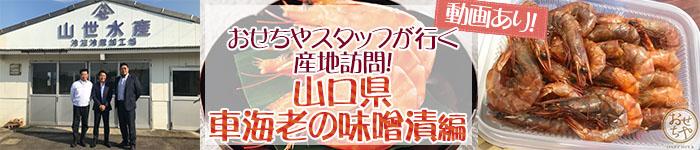 おせちやスタッフが行く産地訪問!~山口県・車海老の味噌漬編 ~