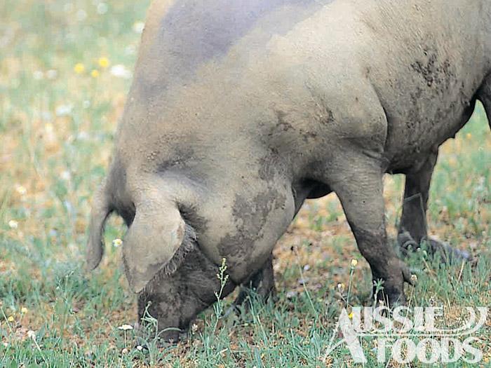 イベリコ豚とは